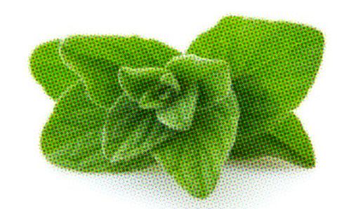 oregano cures oral thrush